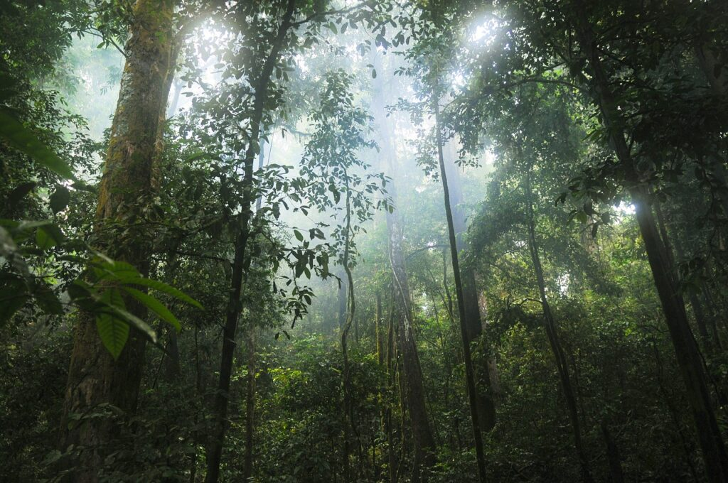 jungle, forest, trees-601542.jpg
